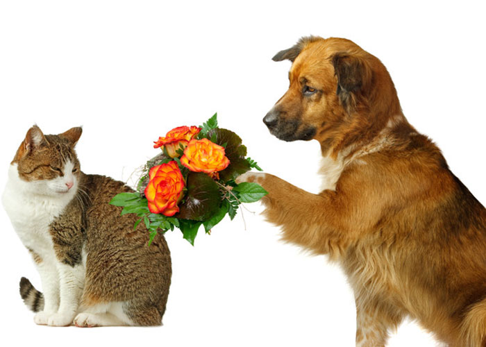 photo of a dog bringing flowers to a cat for forgiveness